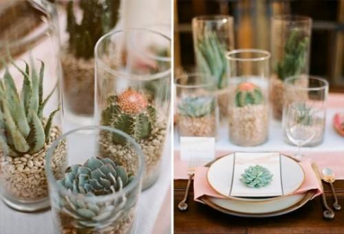 кактусы в вазе