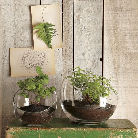 Растения в Мини-террариумах